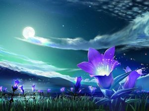 rsz_1rsz_flower-under-night-sky-wallpaper